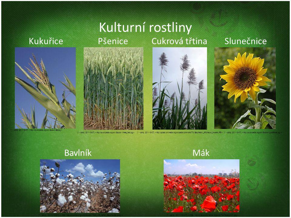 Kulturní rostliny Kukuřice Pšenice Cukrová třtina Slunečnice Bavlník Mák [1 - zdroj. 2011-15-07]. < http://cs.wikipedia.org/wiki/Soubor:Zea.jpg >
